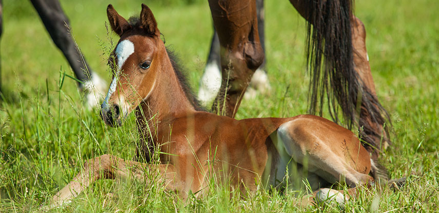 Prospective Foal Equine Insurance - The marks Agency Inc