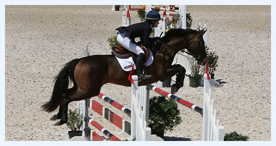 Equestrian Horse Jumping - The Marks Agency Equine Insurance